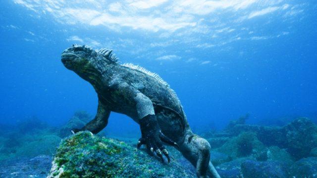 A csodálatos Galápagos IMAX 3D