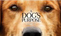 a_dogs_purpose