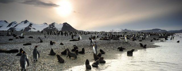 A pingvinkirály 3D (The Penguin King 3D) 2012