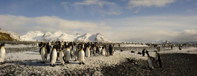 A pingvinkiraly 3D-03