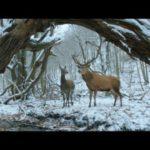 maria_es_endre-a-testrol-es-a-lelekrol-film
